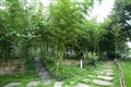 翠綠的竹林