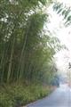 通往酒店的竹林小徑