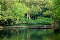 池面經過的小舟