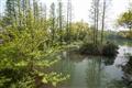 茶館前的一池綠映