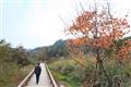 龍川灣美景