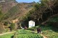 上西古風村菜圃