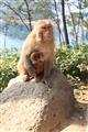 母猴與小猴