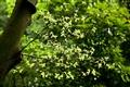 青翠的綠葉