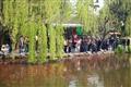 成群遊客欣賞池內錦鯉