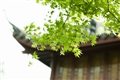 平湖秋月日景