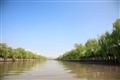 一直蜿蜒向前的運河景觀
