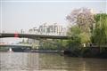 橋頭的柳樹與花
