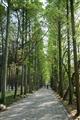 翠綠竹蔭小徑
