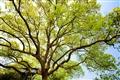 東浦橋-翠綠的樹葉盡顯春天氣息