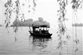 垂柳包圍著小船的有趣畫面