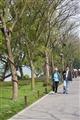 西湖隄邊步道