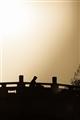 夕陽剪影映照於橋上的過客