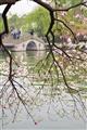 利用樹枝與背後橋上的遊客形成趣味框景