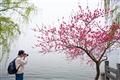 攝影愛好者專注著拍攝花朵