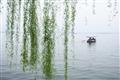 綠柳與小舟