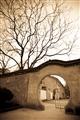 月洞門牆與枯樹