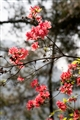 千島湖花景