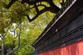 紅黑圍牆與綠樹相映成趣