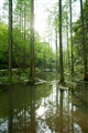 竹林水池溼地
