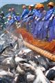 高躍的魚群跟漁夫們的對照