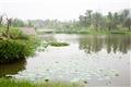 館外溼地水池