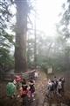 遊客在大樹王下拍照