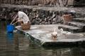 居民於塘邊洗滌衣物
