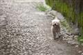 路過的可愛小狗