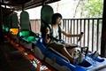 天成野櫧林滑車