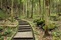 天成野櫧林步道